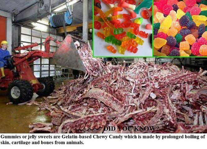 what is the gelatin in jello made from