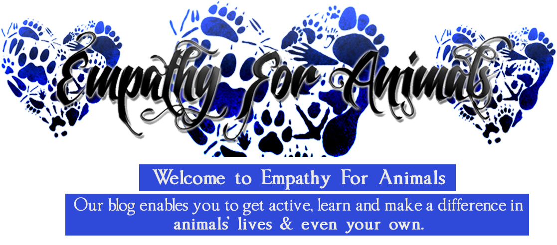 Empathy For Animals