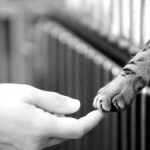 Little Acts of Kindness for Animals