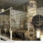 Shopping Vs. Adopting Companion Animals