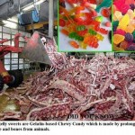 What's Wrong With Gelatin?!